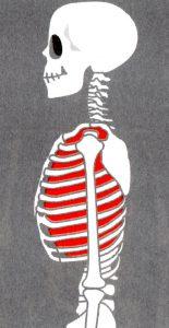 山口県下関市 整骨院 体幹トレーニング 骨盤矯正 猫背矯正 交通事故